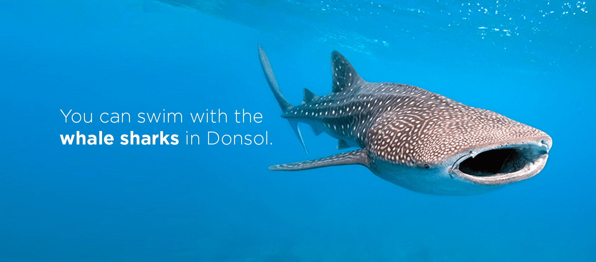 """You can swim with the whale sharks in Donsol."""